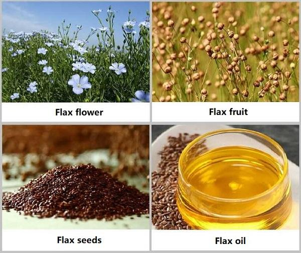 What Is A Flax Seed