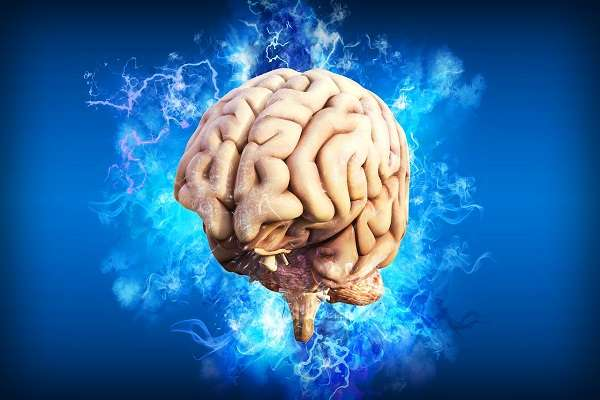 Read more about the article What Foods Are Good For Brain Health?