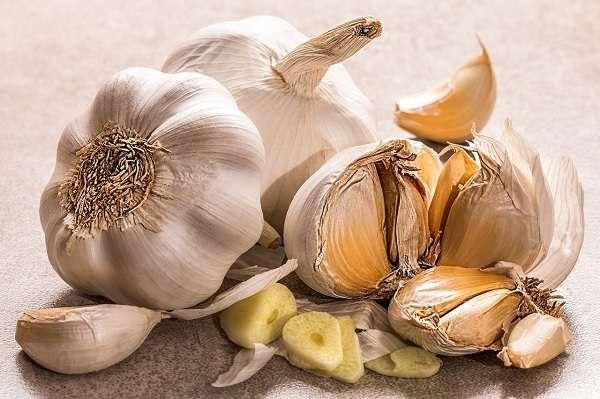 Gut healing foods list